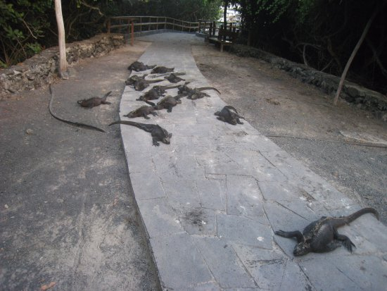 Concha de Perla: Дорога к лагуне