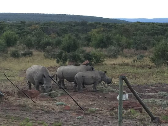 Welgevonden Game Reserve, South Africa: Jamila Game Lodge cc