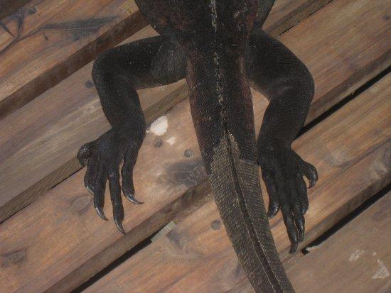 Concha de Perla: Лапы-хвост