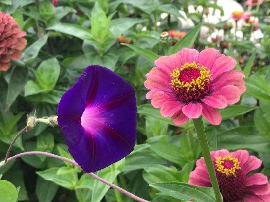 写真Coastal Maine Botanical Gardens枚