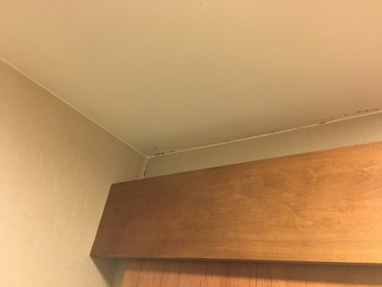 Rosenberg, Техас: A little mold over the bathroom door
