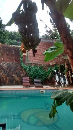 Passaro Suites Hotel: solarium y vegetación