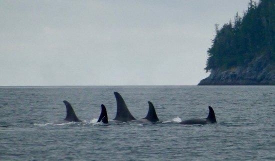 Alert Bay, Canada: photo0.jpg
