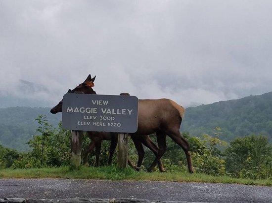 The Maggie Valley Restaurant: photo0.jpg