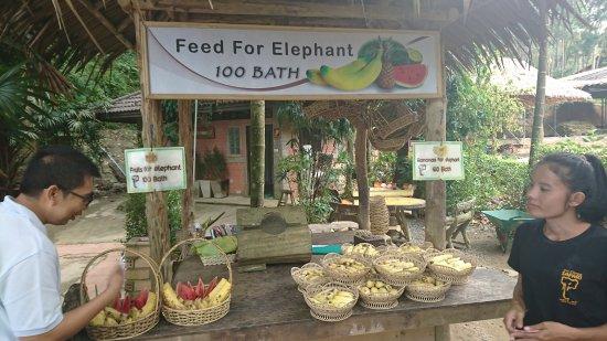 Kok Chang Safari Elephant Trekking: DSC_8736_large.jpg
