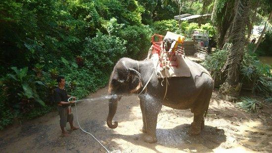 Kok Chang Safari Elephant Trekking: DSC_8735_large.jpg