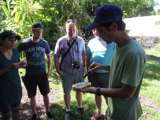 Kilauea, HI: Owner Kao Kahili points out the cacoa bean in the fruit