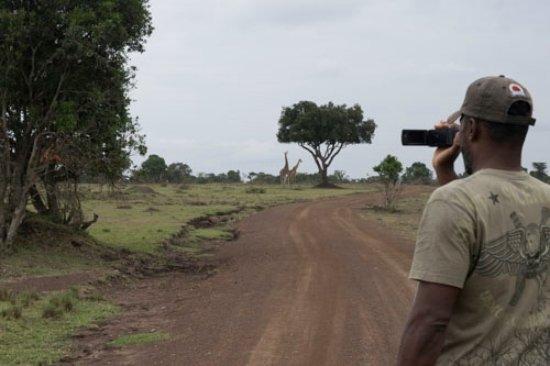 Mara West Camp: Giraffes on the road to the camp (Mara West)