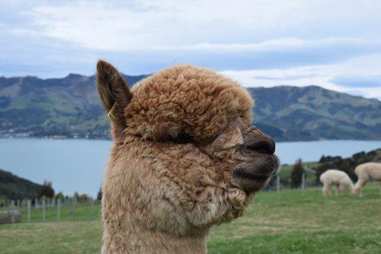 Akaroa, New Zealand: Dom