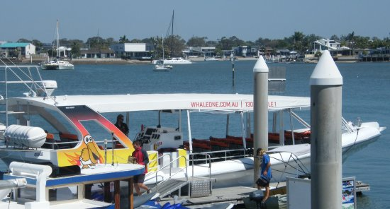 Mooloolaba, Australia: I'd recommend the 2 hour trip on the fast boat, Wild One