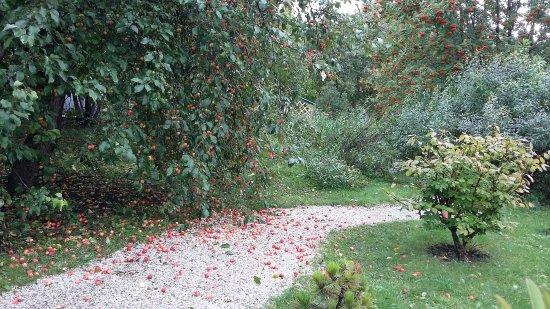 Roev Ruchey Zoo: яблоневый садик