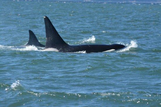 Richmond, Canada: Orca