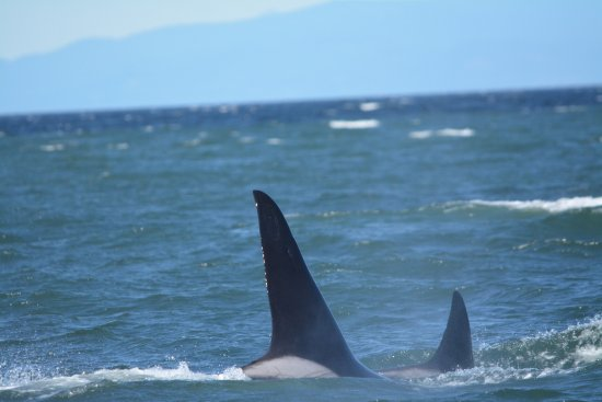 Richmond, Canadá: ORca