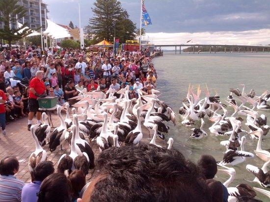 The Entrance, Avustralya: birds feeding