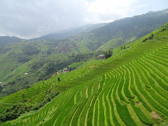 Long Sheng's Dragon Spine Rice Terraces