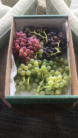 De Rosa Vineyard Bed and Breakfast: Breakfast by Anna and the grapes from their vineyard Anna packed for us as we were leaving!