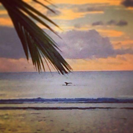 Arorangi, Cooköarna: photo7.jpg