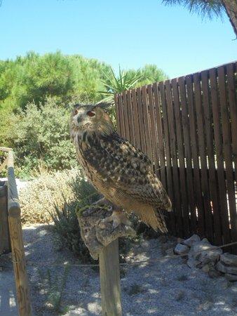 Teleférico Benalmadena: vogelshow. (was ingekort wegens te veel wind) maar toch de moeite.