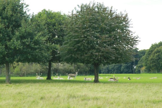 Knutsford, UK: Deer grazing beneath trees