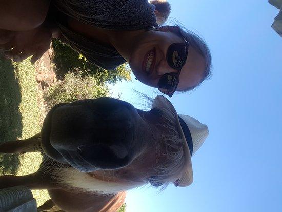 Outeniqua Moon Percheron Stud and Guest Farm: 20170226_150002_large.jpg