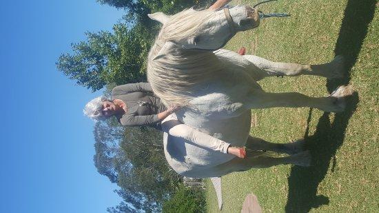 Outeniqua Moon Percheron Stud and Guest Farm: 20170226_151530_large.jpg