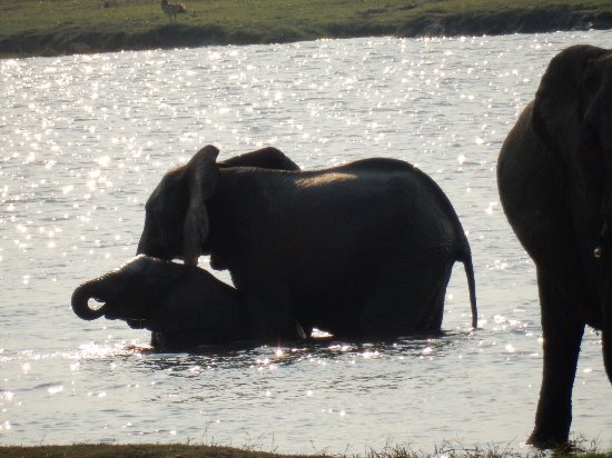 Kasane, Botsuana: photo3.jpg