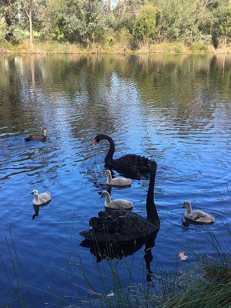Hyde parc à Perth : photo3.jpg