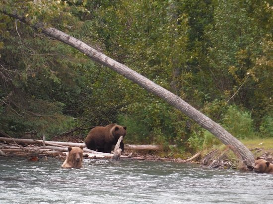 Cooper Landing, Αλάσκα: Mother and cubs