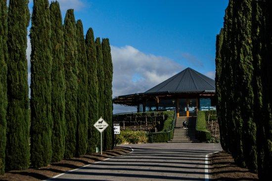 Hahndorf, Australia: A lovely sunny arvo at Hugh Hamilton Winery