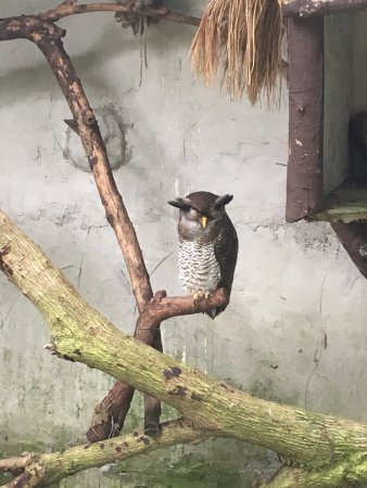 Kuala Lumpur Bird Park: photo0.jpg