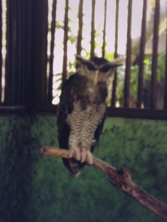 Tanjung Benoa, Indonesia: Owl in cage