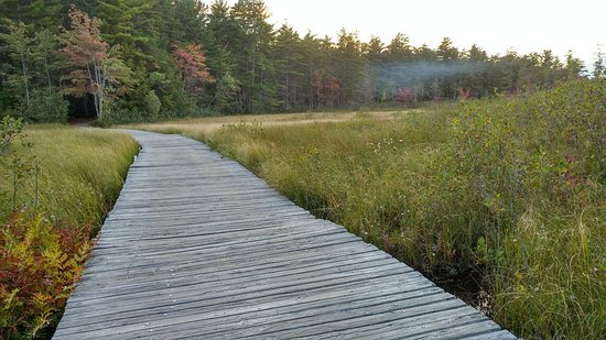 Chocorua, NH: Dog walk trail through the wetlands.