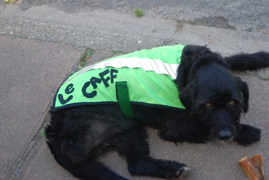 Le Caff : Oi with his new coat, he isn't impressed.