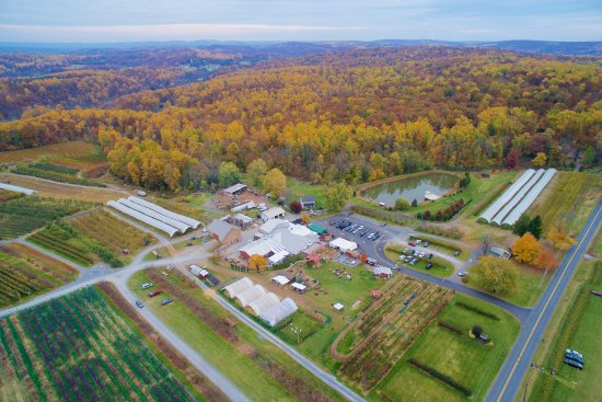 Morgantown, PA: Weaver's Orchard is nestled in the rolling hills of Southern Berks County