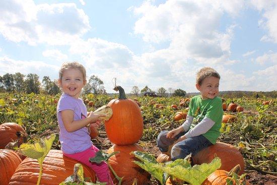 Morgantown, PA: Pumpkin picking begins in late September.