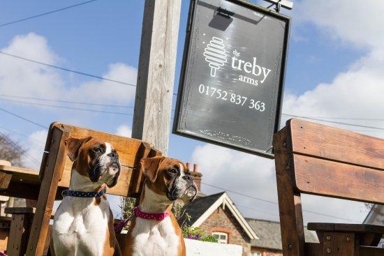 Plympton, UK: Dog Friendly Pub