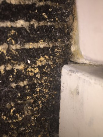 Colonnade Hotel: yellow mold growing on carpet by shower