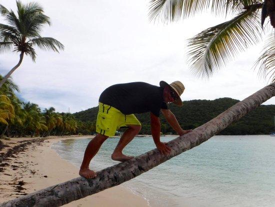 Mayreau: Climbing tree