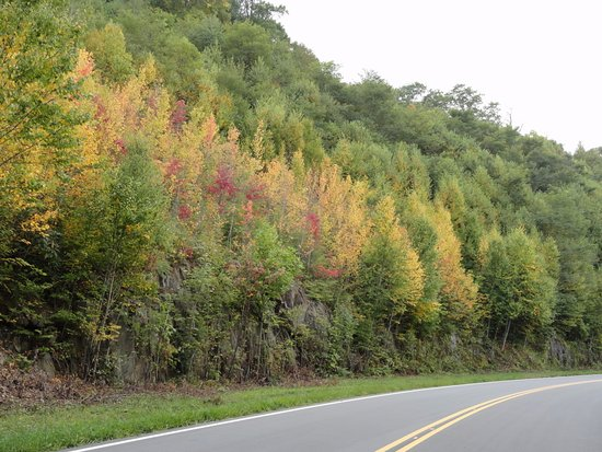 Tellico Plains, TN: Colors are here on the NC side as of Sept 19, '17