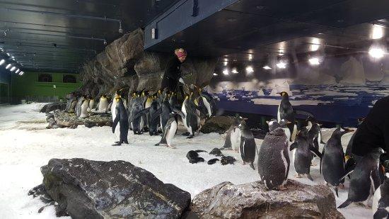 Kelly Tarlton's Sea Life Aquarium : 20170108_113348_large.jpg