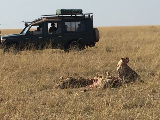 Basecamp Masai Mara: photo4.jpg