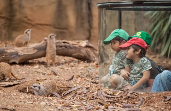 Nashville Zoo: Meerkat Exhibit - photo by Amiee Stubbs