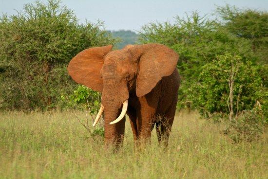 Tarangire National Park, Tanzania: Majestuoso
