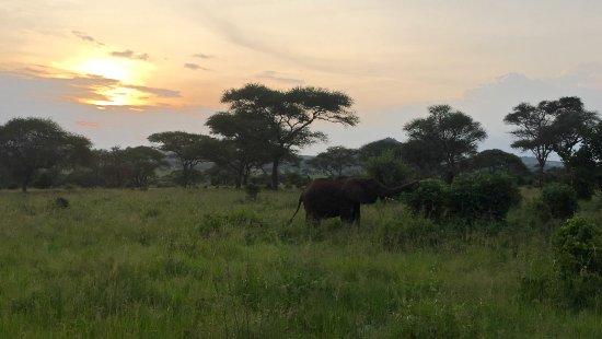 Tarangire National Park, Tanzania: Anochece en Tarangire