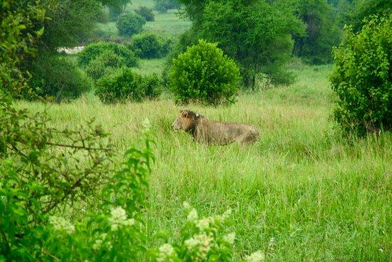 Tarangire National Park, Tanzania: Una sorpresa en cada esquina