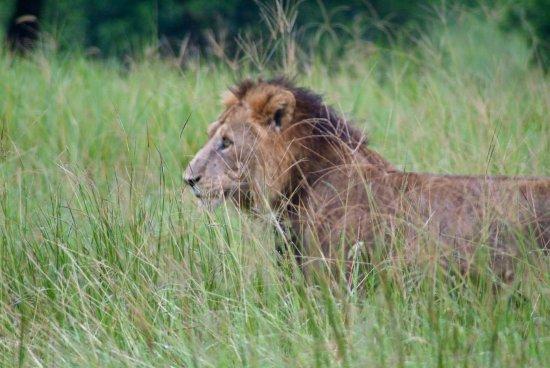 Tarangire National Park, Tanzania: Rey Leon