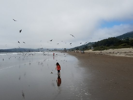 Stinson Beach, Kaliforniya: Beach is easy to walk, and great for kids to play. Note the morning fog.