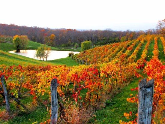 Vinoklet Winery & Restaurant
