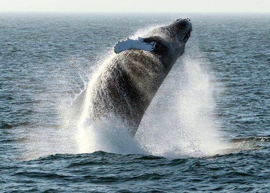 Bar Harbor Whale Watch Company - 2019 All You Need to Know ...