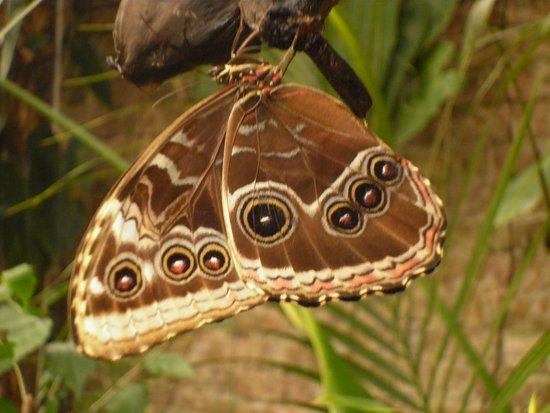 Llanarthney, UK: In the butterfly house
